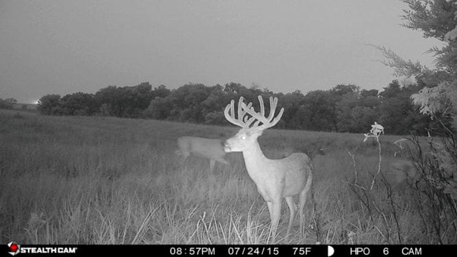 A giant Kansas buck taken by a Heartland Pride Outfitter's trail-camera.